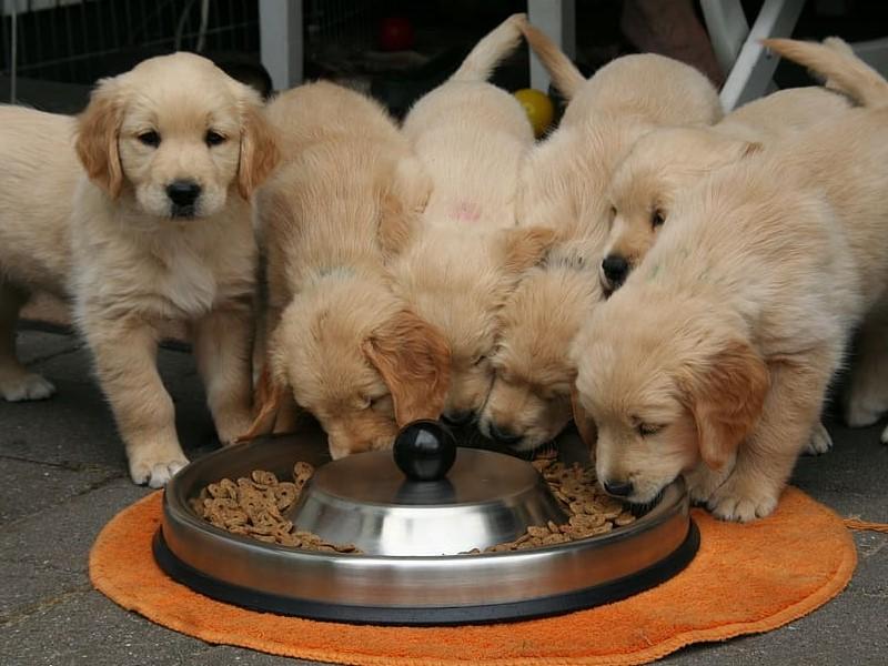 pasja hrana